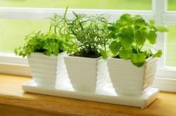 Растения на кухонном окне