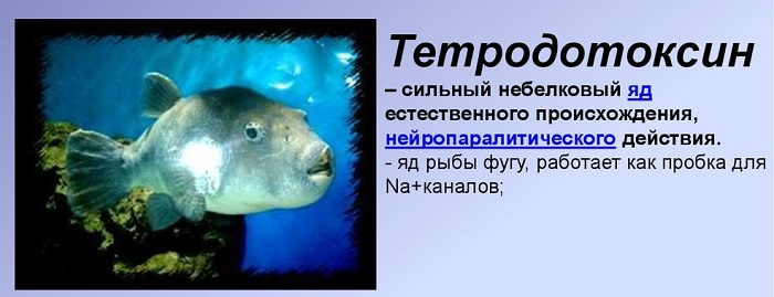 Яд тетродотоксин