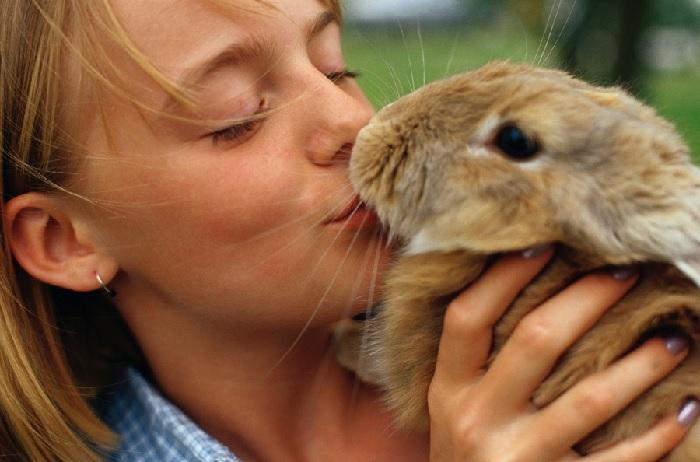 Укус кролика