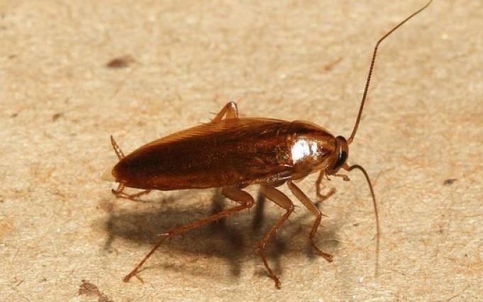 Потравить тараканов в квартире