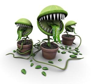 Отравление ядовитыми растениями